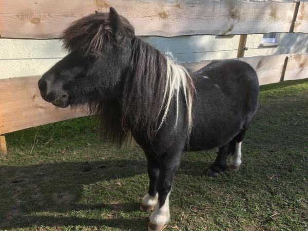 haunerhof_pony_02